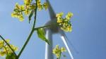 Atomausstieg selber machen: Umweltfreundliche Stromanbieter